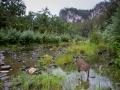 An Eastern Grey Kangaroo enjoys the creek-side cool