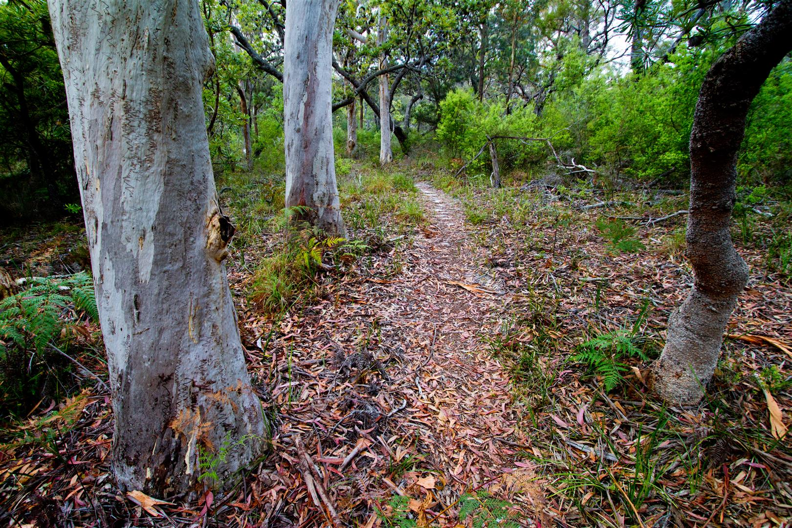 The path to Neembeeba Lookout, Karboora section of the island's national park.