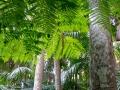 Tree ferns along the creek.