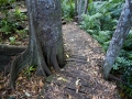A small circuit walk allows visitors to immerse themselves in the rainforest.