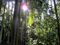 Rainforest shadows.