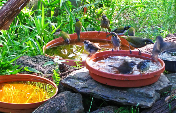 Bird-bath composite image