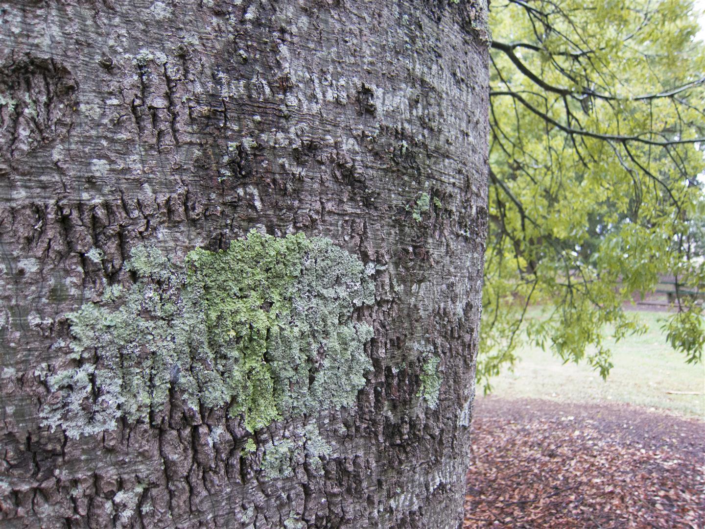 Kurrajong, Queens Park, Toowoomba