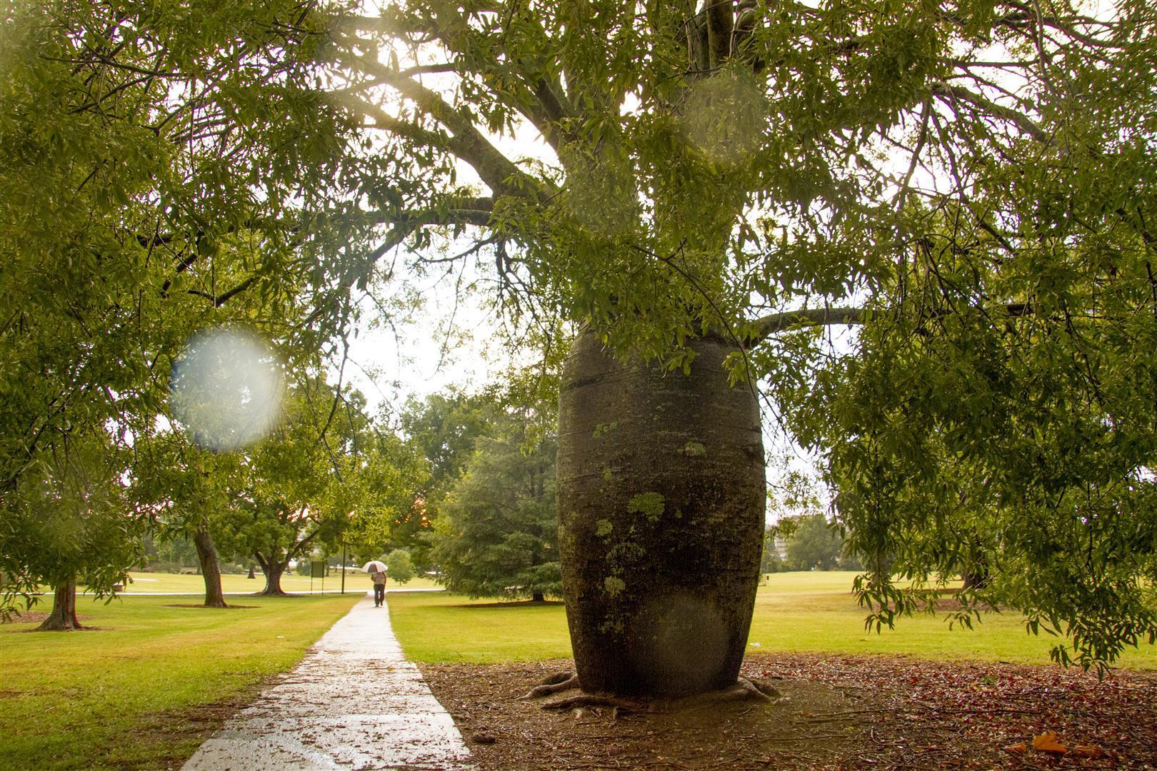 Kurrajong, Queens Park, Toowoomba.