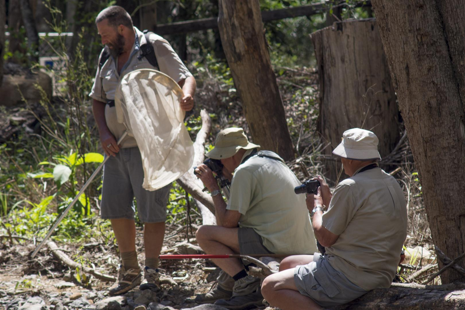 Dragonfly trip with Rod Hosbon, Al Young, Mark Weaver and Harry Ashdown. Redwood Park, Toowoomba.