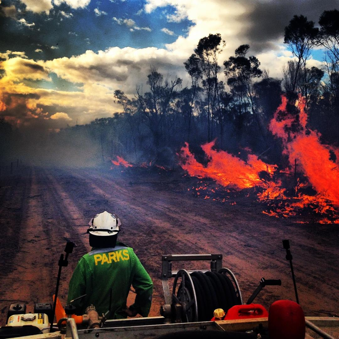 Planned burn at Bringalily State Forest. Photograph by Jonathan McDonald.