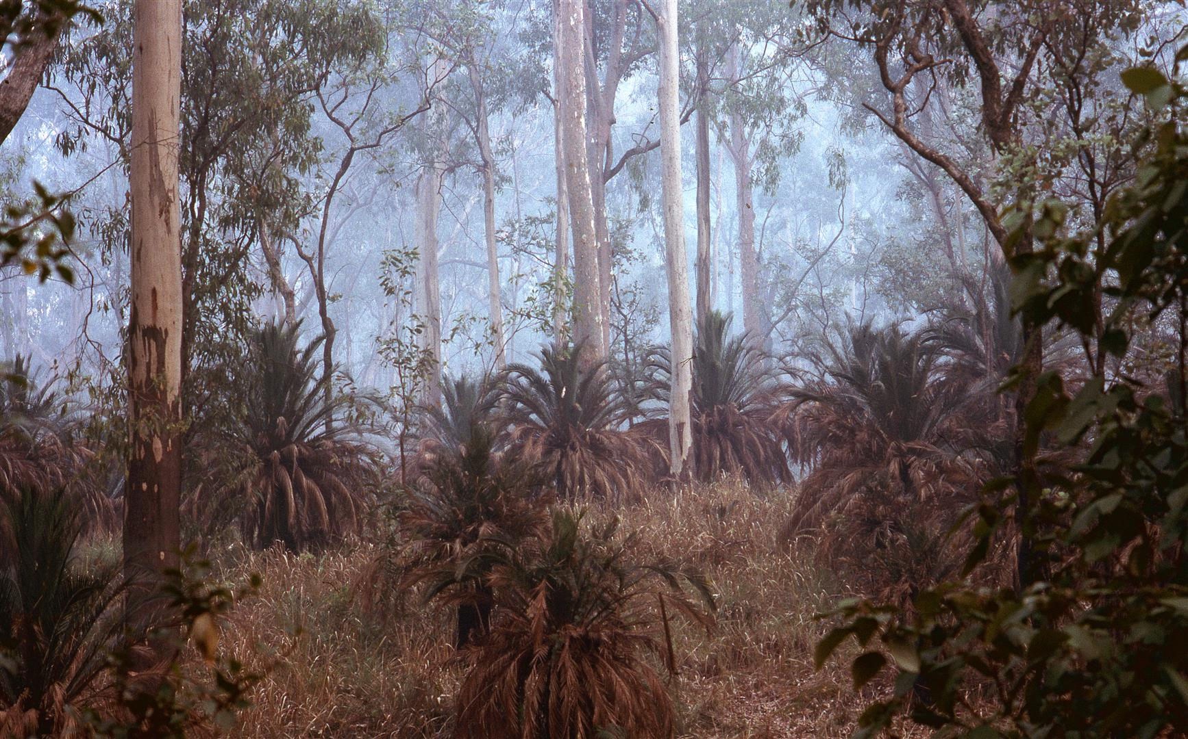 Carnarvon Gorge. Photograph by Bill Morley.