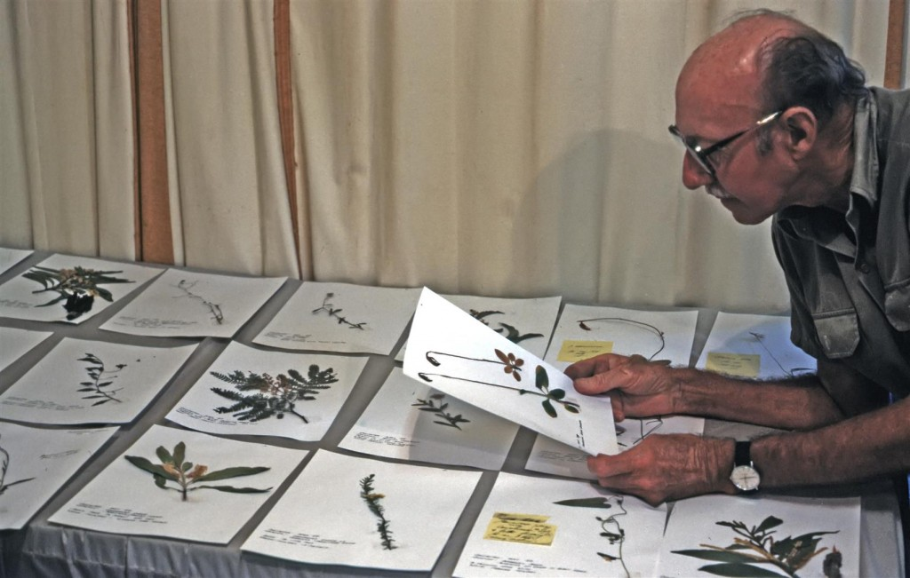 Bill Morley with plant specimens ready for filing, May 1989.