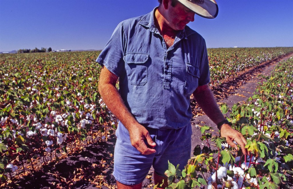 Dennis Wooldridge stands in a crop of cotton on his property Kunari at Bongeen on the Darling Downs.