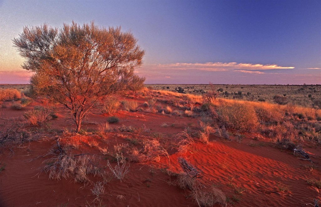 Looking west across the Simpson Desert as the light fades.