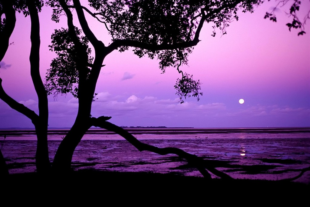 A full moon rising over St Helena Island is framed by a grey mangrove.
