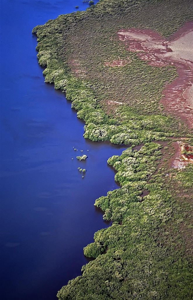 Australia is surrounded by approximately 11,000 km of mangrove-lined coast — around 18% of the coastline, and nearly half of this is found in Queensland. There are about 13,500 ha of mangroves on the edges of the Moreton Bay. Most are found near river mouths and in other areas protected from waves.