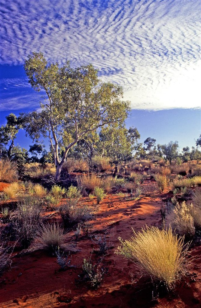 Dry creek bed, Simpson Desert.