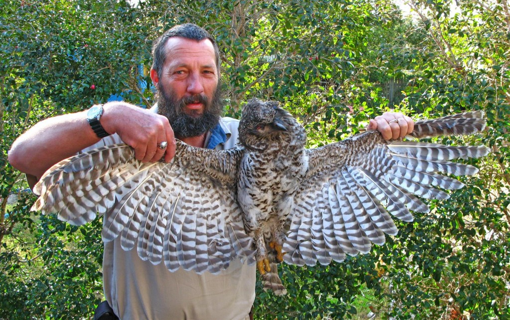 Rod Hobson with a road-killed juvenile Powerful owl, Toowoomba.